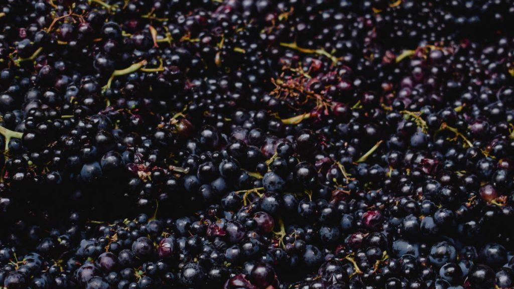 grappe de raisins rouges
