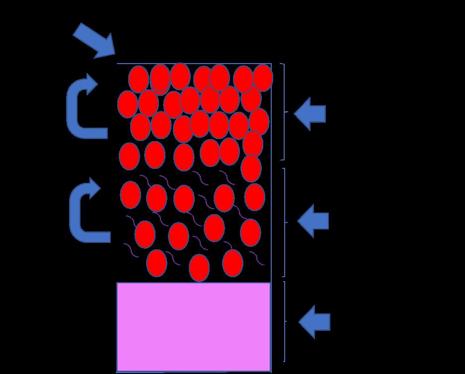schéma macération carbonique