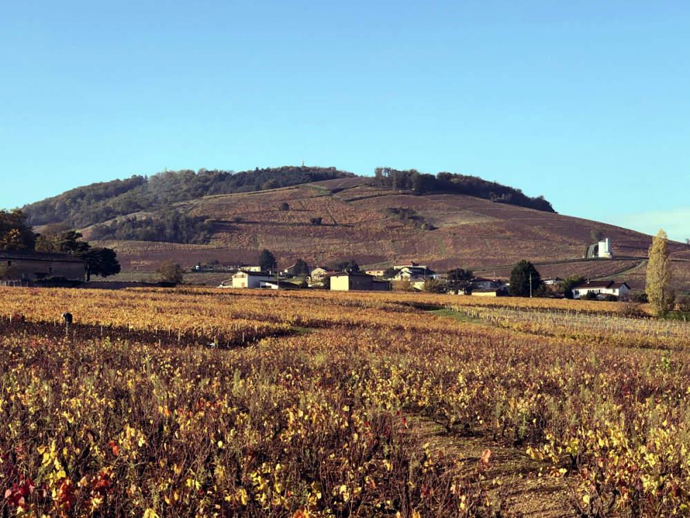 mont brouilly pendant l'automne